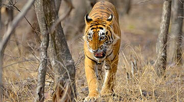 Golden Triangle Tour with Ranthambore 7 Nights 8 Days